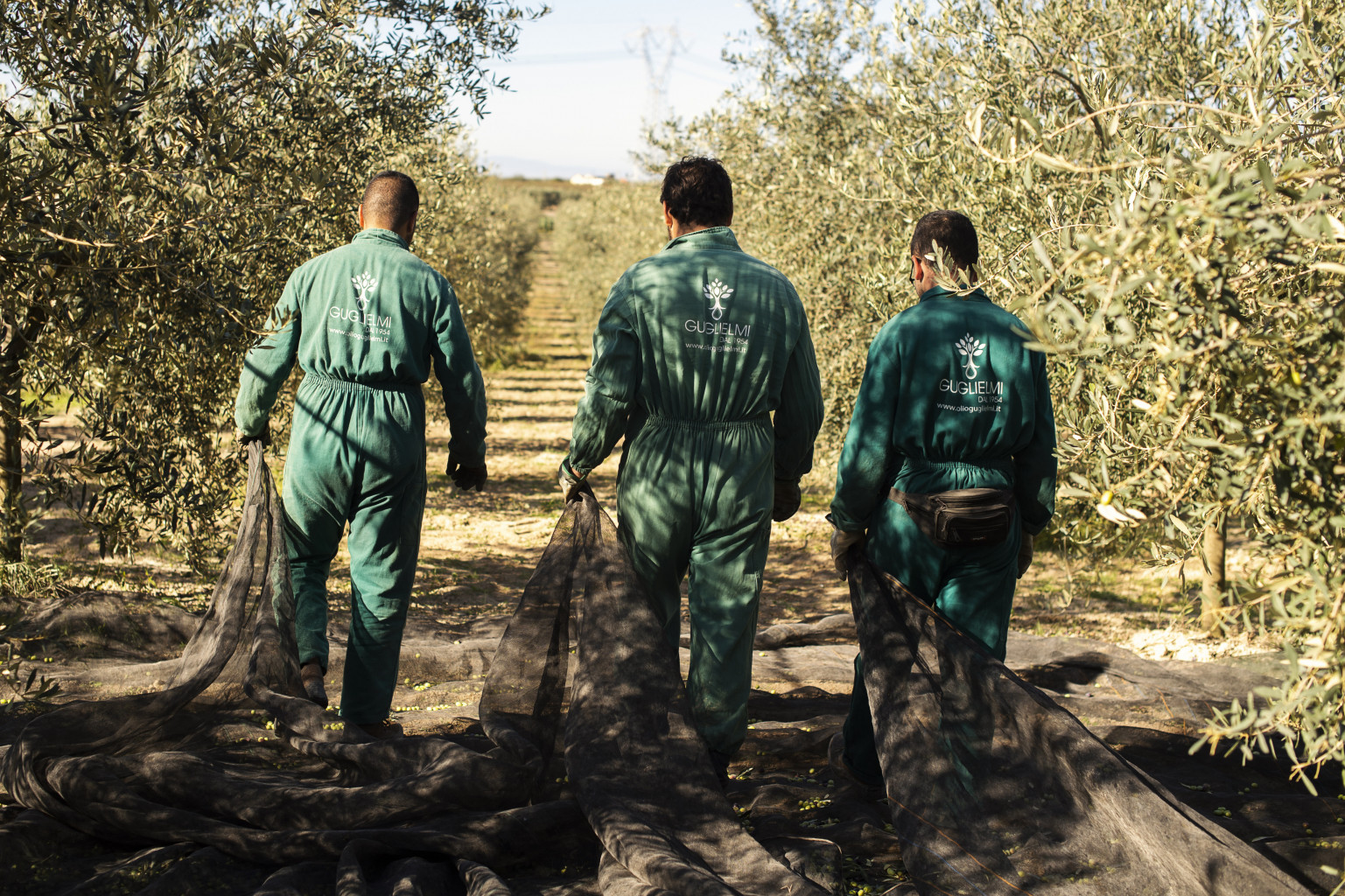 olio extravergine di oliva olio nuovo olio guglielmi